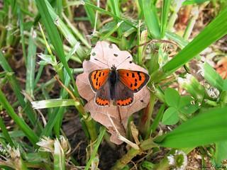 Butterfly 1509