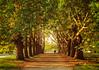 Autumn walk (Mr.Pixel) Tags: autumn allee avenue trees walk autumnmood