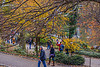 1339_0554FLOP (davidben33) Tags: newyork central park street streetphotos people nature trees bushes leaves colors green yellow sky cloud lake portraits women girl cityscape landscape autumn fall 2017 beaut manhattan blue beauty oilpaintfilter