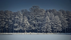 Winter picture ... (lucjanglo) Tags: winter landscape sigma tychy poland