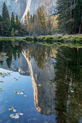 El Capitan Reflection (Kirk Lougheed) Tags: california cathedralbeach elcap elcapitan mercedriver usa unitedstates yosemite yosemitenationalpark yosemitevalley autumn fall landscape nationalpark outdoor park reflection river water