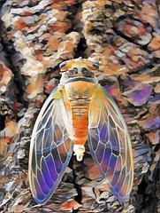 2017-07-12-19-21-32 (Mat_B) Tags: picsart pics art photograph photography manipulation filter color detail artwork modified changed altered vibrant bug insect cicada bark rainbow geode wing