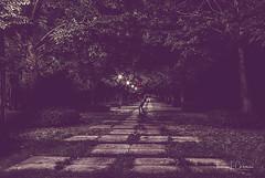 The Juggler (•tlc•photography•) Tags: nelsonatkinsmuseumofart juggle juggler sidewalk vanishingpoint trees grass streetlights
