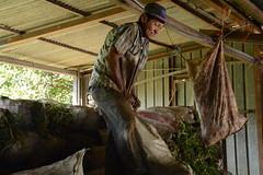 La yuca, una alternativa económica y de seguridad alimentaria en Centroamérica