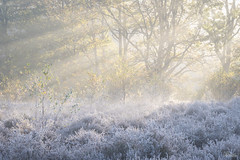 Frosty Heather (JRTurnerPhotography) Tags: fujifilm fujix fujixt2 fujinonxf50140mmf28 fujifilmx jaketurner jrturnerphotography picture print image photo photography photograph photographer mirrorless mirrorlesscamera telephoto zoomlens longlens longlensphotography 50140mm snelsmorecommon snelsmore common newbury berkshire england uk unitedkingdom gb greatbritain europe heathland heath heather frost ice autumn birch silverbirch tree trees dof bokeh winter 2017 sunrise dawn sunlight goldenlight goldenhour sunny northwessexdowns wessex wessexdowns downs aonb areaofoutstandingnaturalbeauty mist lightrays rays