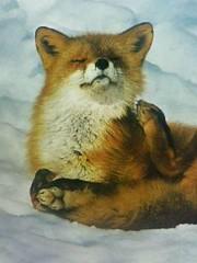 #fox https://t.co/40UhhLWL2d (hellfireassault) Tags: foxes fox httpstco40uhhlwl2d q foxlovebot november 11 2017 0400pm