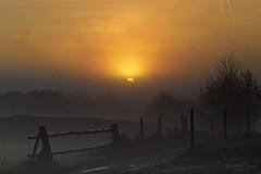 I hear you calling (Rita Eberle-Wessner) Tags: dämmerung dawn sonnenaufgang sunrise himmel sky nebel fog zaun fence wiese weide meadow landschaft landscape baum tree bäume trees sonne sun orange morgen herbst autumn fall morning wald forest berg mountain odenwald