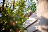 ILCE-7M2-05361-20171213-1523 // Minolta MC (MC-II) Rokkor-PG 58mm 1:1.2 (Otattemita) Tags: 58mmf12 florafauna mcrokkor minolta minoltamcmciirokkorpg58mmf12 rokkorpg fauna flora flower nature plant wildlife minoltamcmciirokkorpg58mm112 sony sonyilce7m2 ilce7m2 58mm cnaturalbnatural ota