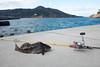 金華山 アイナメ (GenJapan1986) Tags: 2017 アイナメ 太平洋 宮城県 海 石巻市 金華山 釣り 離島 日本 japan miyagi sea pacificocean fishing fish island fujifilmx70