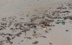 december.2017-Kata-Beach-Phuket-canon-5874