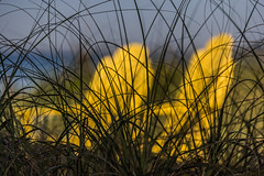 beach chairs (otgpics) Tags: adirondac chairs sand beach sea oats grass dunes silhouette bright yellow contrast longboat key sarasota gulf coast florida west blue serene soft focus wooden relaxing early morning sun