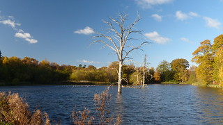20171112 Wlk frm Carburton Ldg_0021 Dead Trees~Clumber Lake