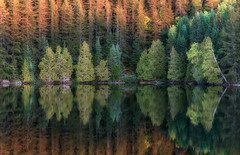 'Day's End' (Canadapt) Tags: evening sunset shoreline trees reflection pattern symmetry mirror keefer lake canadapt