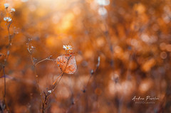 Catch you if you fall... (Pásztor András) Tags: nature autumn forest bokeh flower white leaf leaflet yellow red 35mm f2 yongnuo lens background dof creamy dreamy peaceful dslr nikon d5100 hungary andras pasztor photography 2017