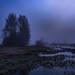 Foggy moor