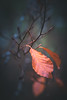 Leaf(ing) (--StadtKind--) Tags: leaf blatt walf forest autumn fall herbst macro macrophotography nature naturephotography closeup sonyilce7m2 f2 manuallens primelens stadtkind