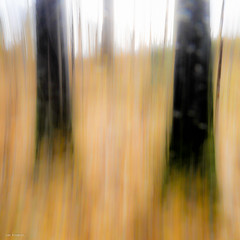 autumn forest (sami kuosmanen) Tags: suomi sky syksy autumn art intentionalcameramovement icm luonto light landscape long liike puu pitkä europe exposure expression emotion valo valotus taivas tree trees creative finland forest kuusankoski kouvola
