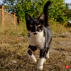 trns-5174 (Tinico Jones) Tags: gato mace katu кот mačka котка gat kočka kat kass kissa chat katze γάτα macska köttur cat gatto kaķis katė мачка qattus katt kot pisică кіт cath קאַץ animal mascota aire libre