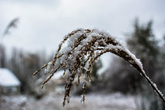 snow_on_grass-5_MaxHDR_Sharp5 (old_hippy1948) Tags: grass