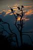 DSC_2937.jpg (Mike/Claire) Tags: bird southafrica 2016 vulture tandatula timbavati