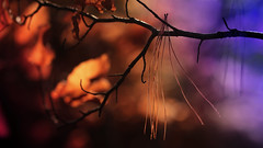 Guillemets d'automne (Rollerphilc) Tags: canon nature automne couleur bokeh 16x9