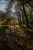 Sun and Tunnel (Jon and Sian Bishop) Tags: tourmac swansea wales uk gower park mill autumn autumnal 2017 canon eos 6d sun tree vertical tunnel over cast beam glare bright sunny walk forest wood trees shadow burst clear cold winter