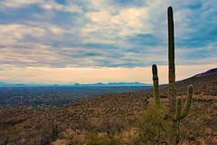 Tucson blue (Francoise100) Tags: arizona az dusk cactus cacti horizon desert desertsouthwest usa
