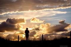 impressed by nature (bernd obervossbeck) Tags: natur nature himmel abendlicht abendstimmung abendhimmel evening eveninglight eveningsky eveningmood dramatischerhimmel dramaticsky person mensch humanbeing silhouette fence zaun gras dünengras holland dünen dunes fujixt1 berndobervossbeck