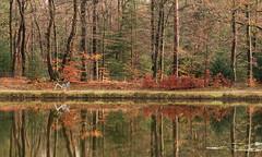 Hoge Veluwe (genf) Tags: hoge veluwe gelderland nederland witfiets witte fiets bomen trees bicycle reflections weerspiegelingen water lake meer sony a99ii outdoor nature autumn herfst
