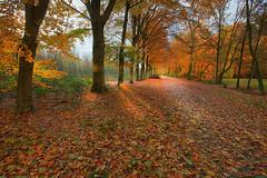 Liesbos Breda (cees van gastel) Tags: ceesvangastel canoneos550d autumn herfst bomen trees liesbos breda liesbosbreda herfstkleuren autumncolours natuur nature landscape landschap noordbrabant nederland netherlands sigma1020mm
