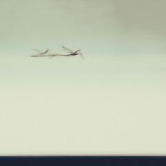Volando voy, volando vengo (Marfanlo) Tags: bird lake lago michigan movimiento eeuu minimal minimalismo pájaros muskegon