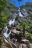 St Columba Falls (Daniel J. Mueller) Tags: australia tasmania stcolumba falls waterfall nature water stream river rocks tree trees wood forest branch fern hdr