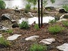 Swale basin with water - Doreen Jones - edited (CA Native Plant Society) Tags: cnps california native plant society home garden swale rain water capture stepping stones watershed approach landscaping boulder front yard permeable fall ambassador southern landscape