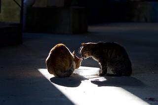 猫さん Cats