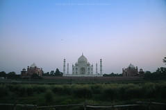 Taj from Methab Bagh (apoorvg1) Tags: taj tajmahal uttarpredesh india incredible symmetry sunset monument wonders world photography travel travelforks tourism blogger green marble love mosque yamuna river agra epitome shah jahan emperor mausoleum tomb mumtaj mahal