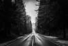 IMG_1807.1 (pavelkalin) Tags: canon 1dx mark ii 2470mm f28 usm l autumn 🍂 fog morning