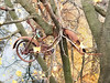Up A Tree (KaDeWeGirl) Tags: newyorkstate westchester county yonkers bicycle rust forgotten abandoned tree