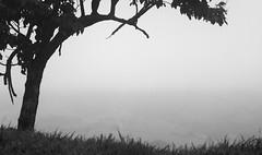 Tree (0289) (Jorge Belim) Tags: flora pb 70200 canoneos7d