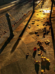 Gone with the wind 💨 (LUMEN SCRIPT) Tags: leaves road light shadow autumn pavement urban emptiness concept conceptual pattern nobody paintingwithlightandshadows backlight beautifulexpression experimental tiles texture geometry ground composition pov perspective paris spiritofphotography fave200 vivid colour color