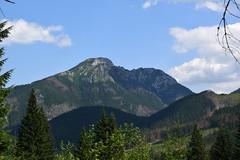The Tatra Mountains, Poland (jacek_szacho-głuchowicz) Tags: tatra poland polishmountains mountains mountain zakopane forest