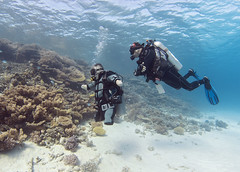 1106_07a (KnyazevDA) Tags: disability disabled diver diving deptherapy undersea padi underwater owd redsea buddy handicapped aowd egypt sea wheelchair travel amputee paraplegia paraplegic