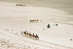 desert (Scherey) Tags: desert animal camels sands dune travel scenery landscape