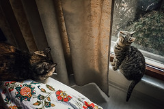 Slowly getting acquainted (Melissa Maples) Tags: istanbul turkey türkiye asia 土耳其 apple iphone iphone6 cameraphone kadıköy caferağa moda windowsill window bed princess blackie animals kitties cats