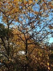 67 (emmess2) Tags: campiglia cinqueterre spezia autumn fall leaves