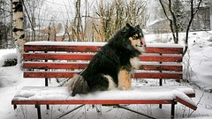 """""""I hope mom hasn't forgotten treats today...."""" (evakongshavn) Tags: dog dogsonadventures dogs snowdog dogsofnorway flickrdogs dogsthathike dogportrait dogphotography outside outsidepictures outdoors outhiking outdoordogs outdoorsphotography outdoorphotography photoshoot photooftheday unlimitedphotos photography photo photooftoday fineartphotography snow winter cold winterwonderland onmywalk walk hike bench red redbench lifethroughahole"""