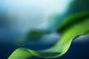 Floating (Daniela Romanesi) Tags: 1149 leaf leaves folha suave floating green blue verde azul leve soft echarpe natural natureza nature folhagem garden