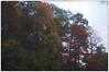 Red Fog (Steve4343) Tags: steve4343 nikon d70 appalachian trail cherokee national forest red green blue yellow orange white clouds sky beautiful tennessee autumn beauty carter johnson county lake watauga hampton elizabethton cloud colorful woods garden gardens happy leaves rocks wildlife landscape mountain tree trees grass water wood fog butler fall