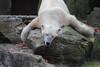 IMG_2328 (neatnessdotcom) Tags: new york city nyc bronx zoo tamron 18270mm f3563 di ii vc pzd canon eos rebel t2i 550d