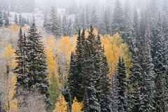 (bpark_42) Tags: sony a7r2 100400mm 100400 landscape fall autumn aspen aspens color snow fog colorado forest