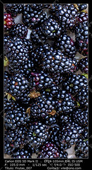 Box of Blackberries (__Viledevil__) Tags: antioxidant background berries berry blackberry box bramble delicious dessert food fresh freshness fruit gourmet healthy ingredient natural organic picking plant rag raw ripe rustic seed sweet tasty three vitamins yummy